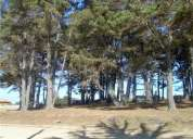 arriendo cabaña a 3 cuadras del bosque de el canelo.