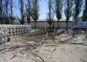 Tala y poda de arboles presupuesto  gratis 5353471  comuna de paine