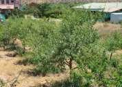 Vendo linda parcela en comuna coquimbo