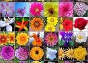 Curso flores de bach temuco