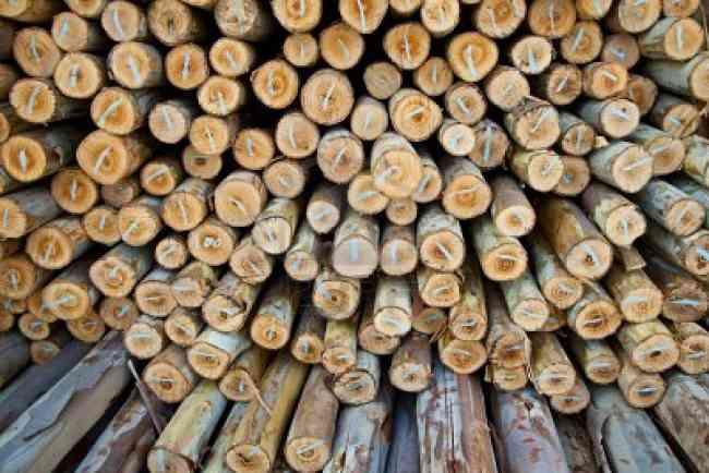 Eucaliptus, varas, postes, mineria, agricola, invernaderos, construccion, polines