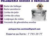 Peluquería canina a domicilio en santiago