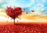 El tarot del amor hd 087656514 amarrado humillado a tus pies exitoso