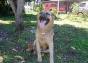Lindo perro busca un hogar mas amplio