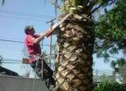 Limpieza de palmeras en santiago