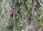 Parcelas de agrado con arboles nativos